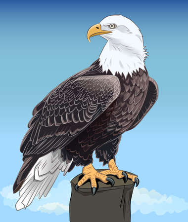 Majestic Bald Eagle still sitting keen eyes against the blue sky. Realistic image. Vector illustration.