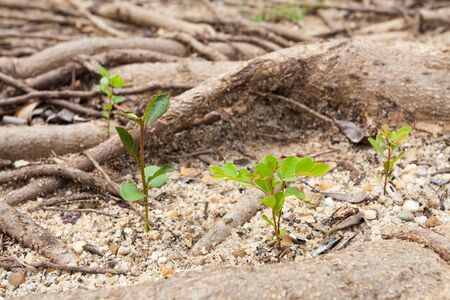 Little trees grow form sand Stock Photo