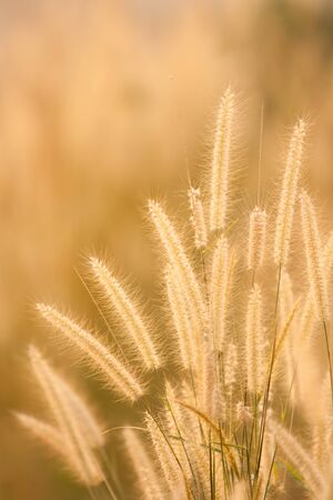 Dry grass field in scene Stock Photo