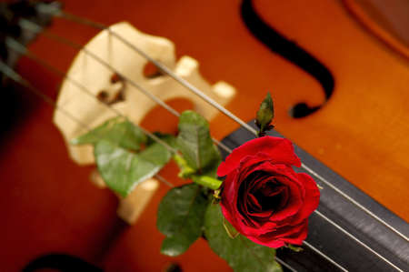 red rose and cello