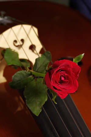 rose and cello Stock Photo - 8647059