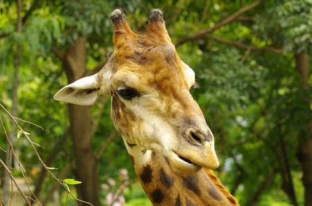 an ungulate: An African artiodattili mammiferi ungulati