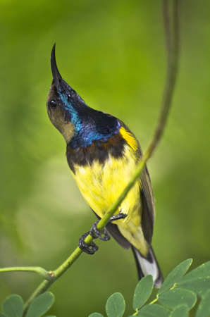 little small bird in thailand