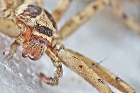 Low angle view of spider