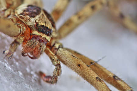 living organisms: Low angle view of spider