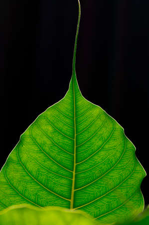green leaf Standard-Bild