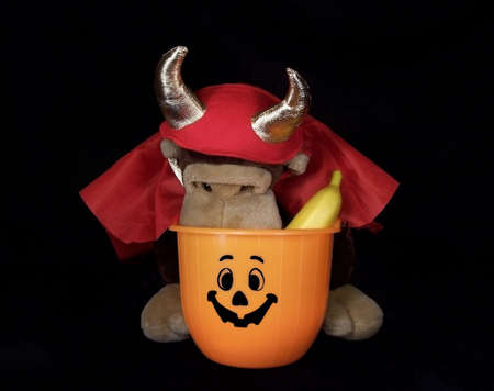 goodies: Stuffed monkey dressed up as a little devil looking through his Halloween trick or treat bucket for goodies.  Stock Photo