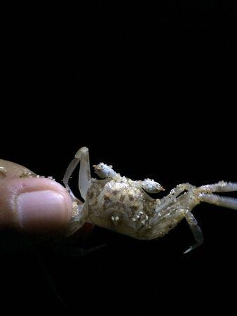 eye: Crab