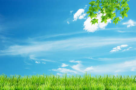 Green leaves in the sky background  Stock Photo