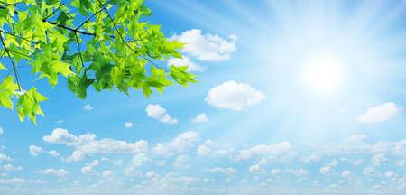 young leaf: Hojas verdes y el sol en el cielo de fondo Foto de archivo