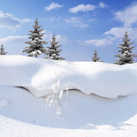 winter snow covered fir trees  on blue sky background