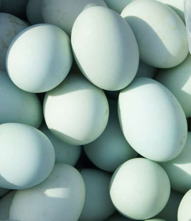 Many Duck eggs on a market, format filling