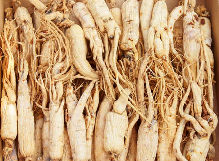 Chinese ginseng, one of the well-known tonic. photo