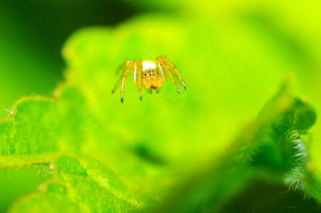 Spider resting on its spider web. Stock Photo - 13928326