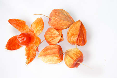 Physalis peruviana, completely isolated over white background  photo