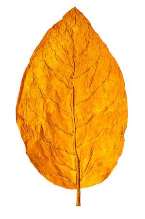 hoja seca de tabaco en primer plano el fondo blanco