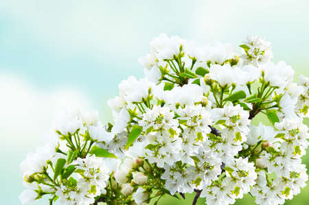Beautiful mountain pear in the sky background  photo