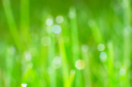 Defocus of green grass and the sun spot background. Stock Photo
