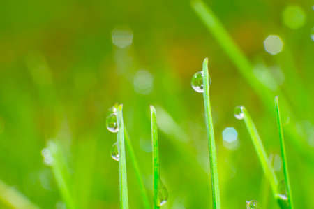 Fresh grass with dew drops close up Stock Photo - 14020912