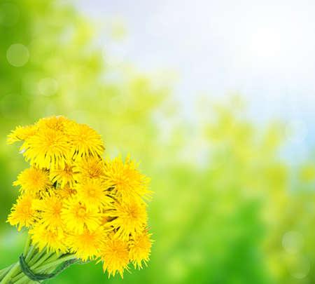 Dandelion bouquets in the sun  photo