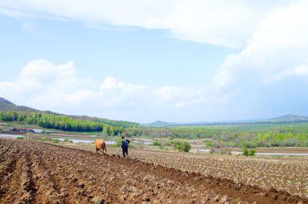 erhaltend: Junge B�uerin Pfl�gen der Felder in der konservativen Weg mit h�lzernen Pflug und Stiere