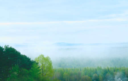 morning mist cover pine tree forest Stock Photo - 14319919