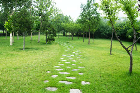 Stone Pathway in a Lush Green Park photo