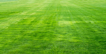 Green grass background texture straight photo
