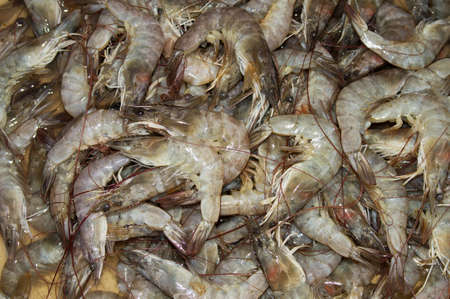 Fresh prawns in the market