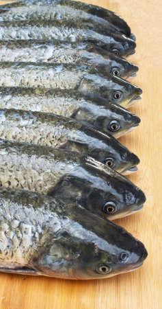 grass carp: Grass carp fish head queue