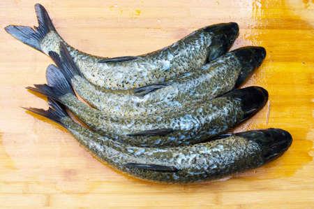 grass carp: The grass carp queue down the board