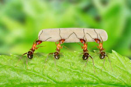 Ants unity and cooperation Stock Photo