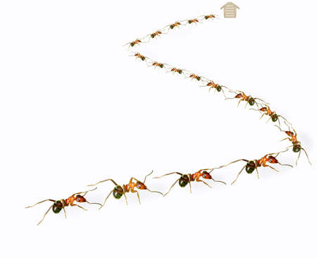ants: A group of ants arranged in  s  shape