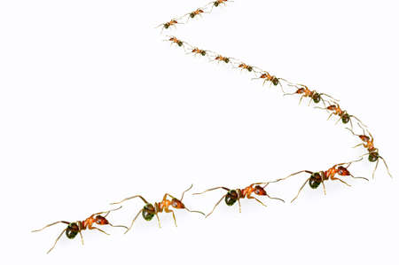 A group of ants arranged in  s  shape  photo