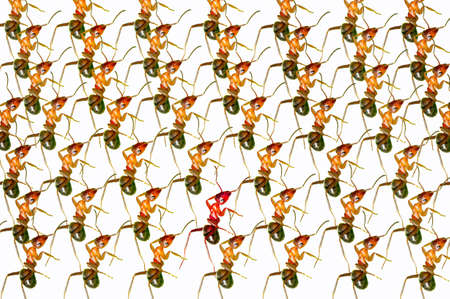 The brown forest ants queue. Stock Photo - 16731990