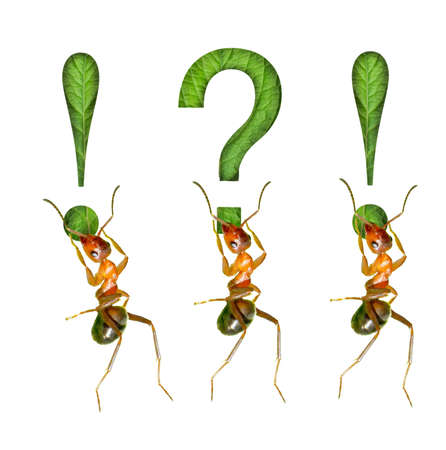 The ant and the exclamation mark Stock Photo - 16731975