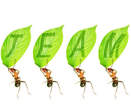 Ant tell us team of infinite power Stock Photo - 16731984