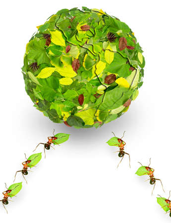 Ants use leaves a earth Stock Photo - 16731991