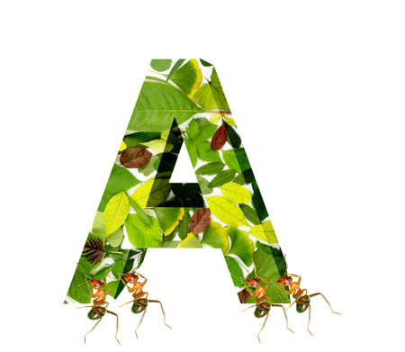 The ants move the letter A Stock Photo - 16731979