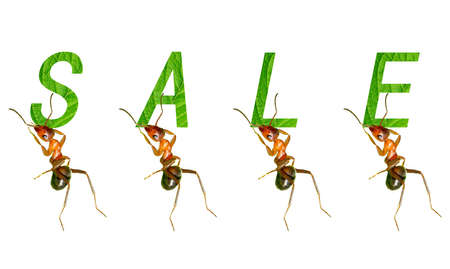 The ants to promote creative picture Stock Photo