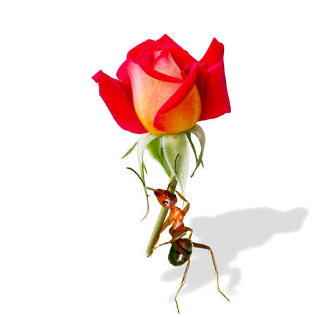 Holding the flower of ants  Stock Photo - 16731970