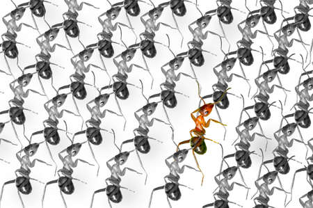 The brown forest ants queue Stock Photo - 16731987