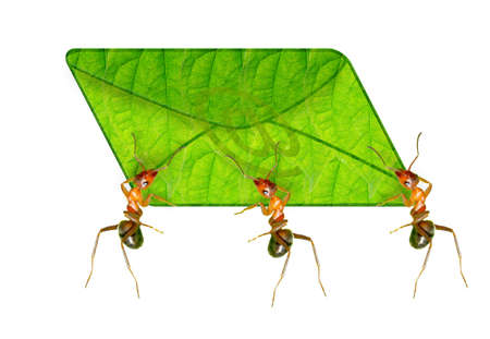 Ants messenger is sending the message Stock Photo - 16858193