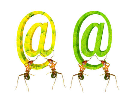 The ants and network symbol Stock Photo - 16858187