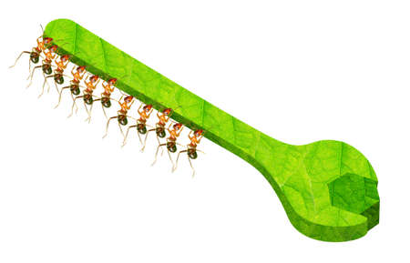 The ant team used tools wrench to turn the screw Stock Photo - 17124767