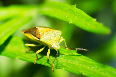 A green bug on the leaves  Stock Photo - 17277493