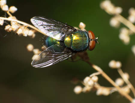 compound eyes: Close-up of a fly in the outdoor. Stock Photo