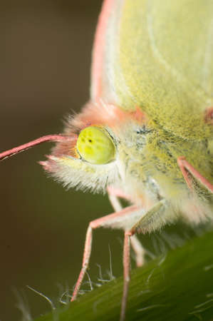 Close-up of the head of a butterfly Stock Photo - 17302629