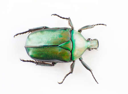 The green scarab isolated in white background