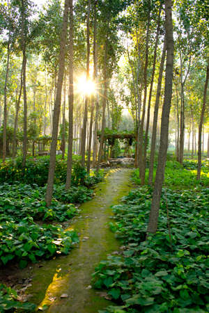 The forest of the sun in summer Stock Photo - 23162210